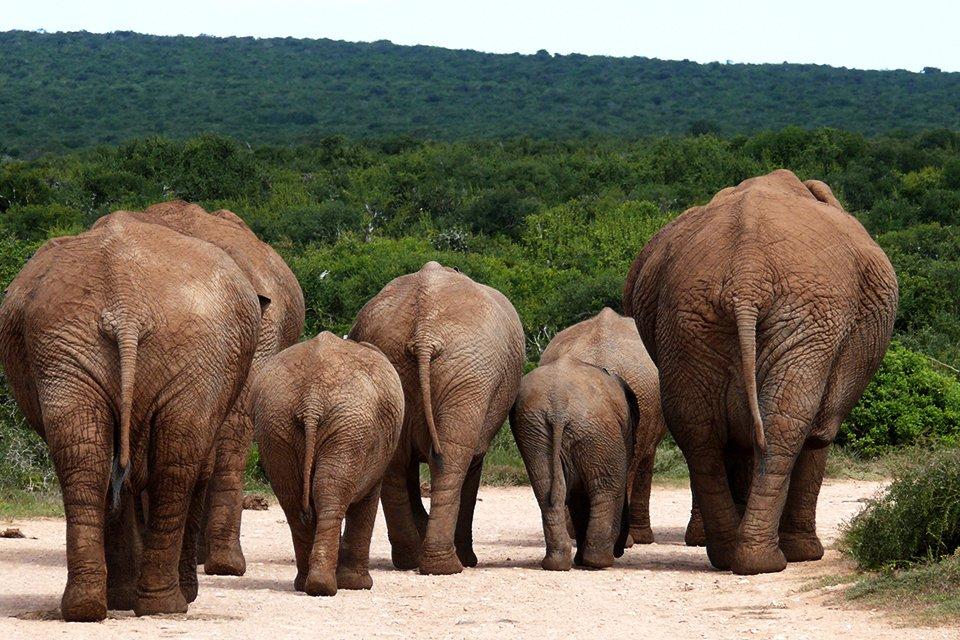Addo Elephant N.P., Zuid-Afrika