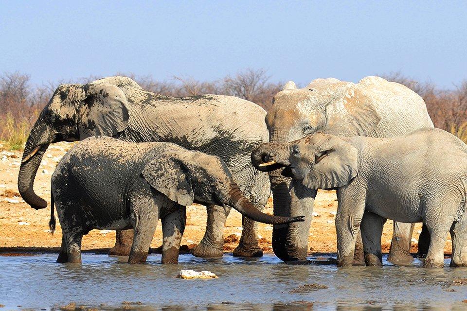 Olifanten in Hwange N.P., Zimbabwe