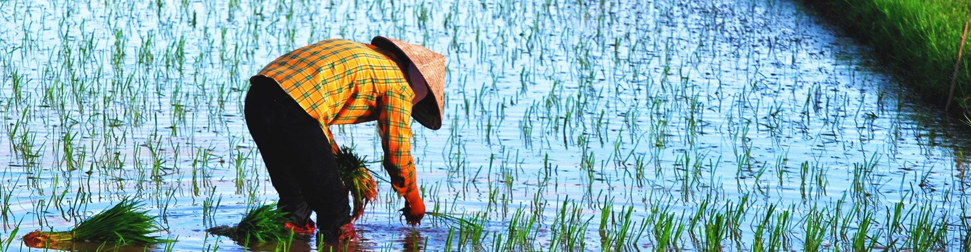 Rijstvelden op Bali, Indonesië
