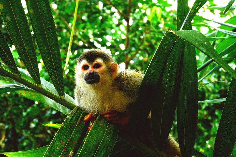 Sarapiquí, Panama en Costa rIca