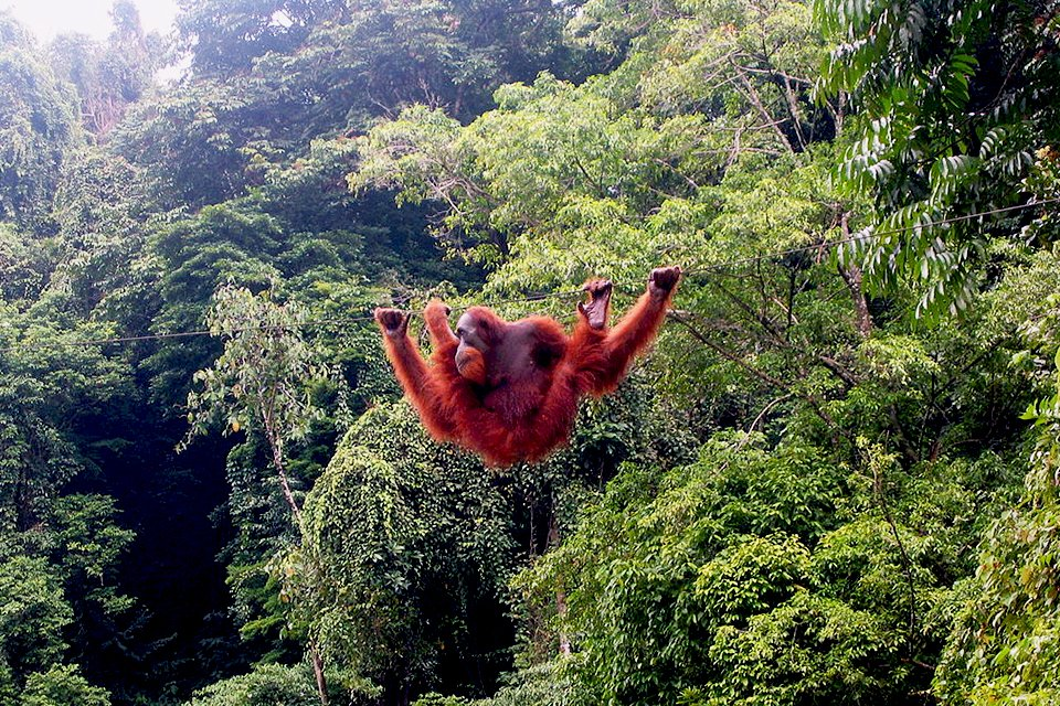 Sumatra, Indonesië