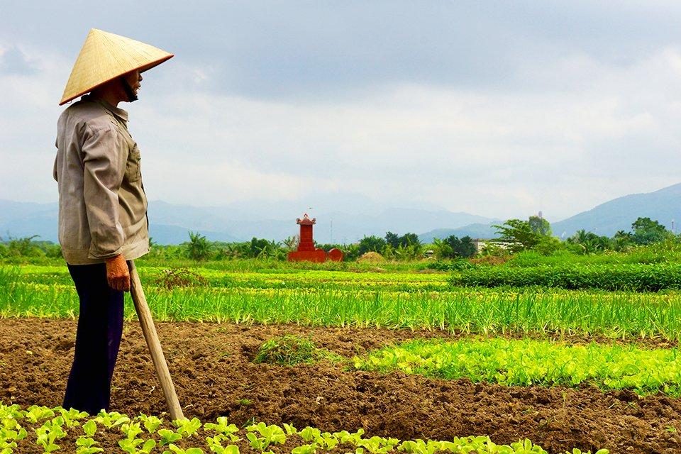 Landbouw, Vietnam