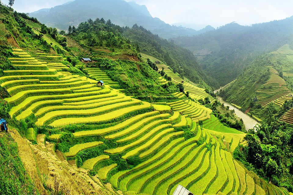 Rijstvelden, Vietnam