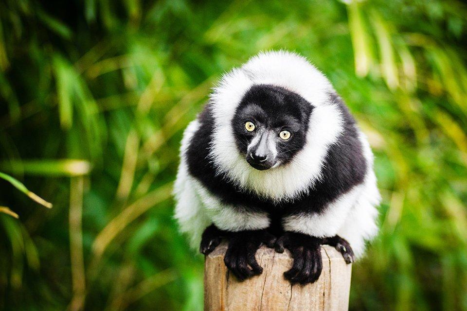 Andasibe N.P., Madagaskar