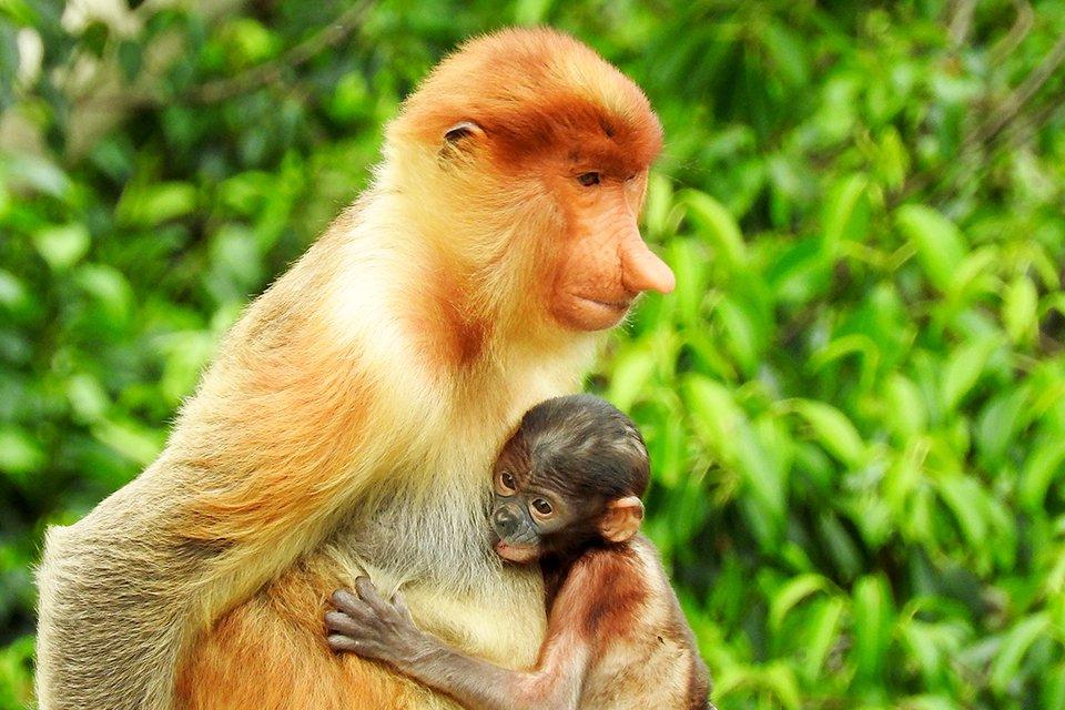 SRC-reizen: Maleisisch Borneo