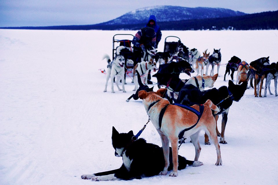 SRC-reizen: Winters Lapland