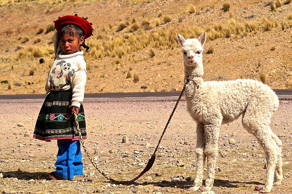 Meisje met alpaca, Peru