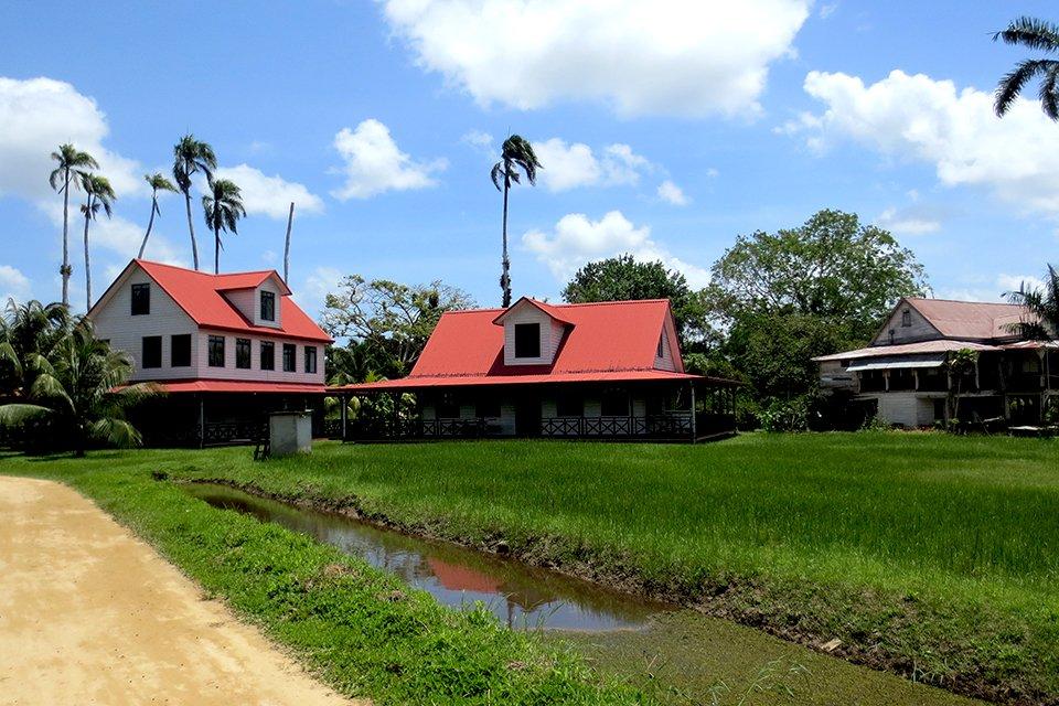 Peperpot plantage, Suriname