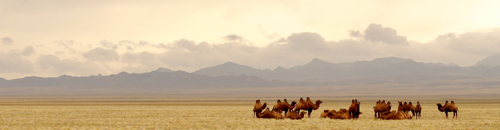 Gobi-woestijn in Mongolië