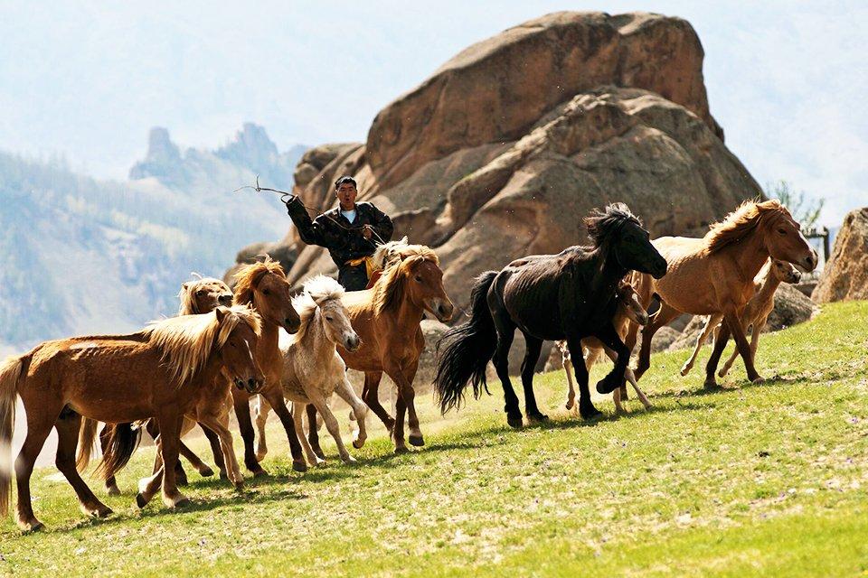 Paarden, Mongolië