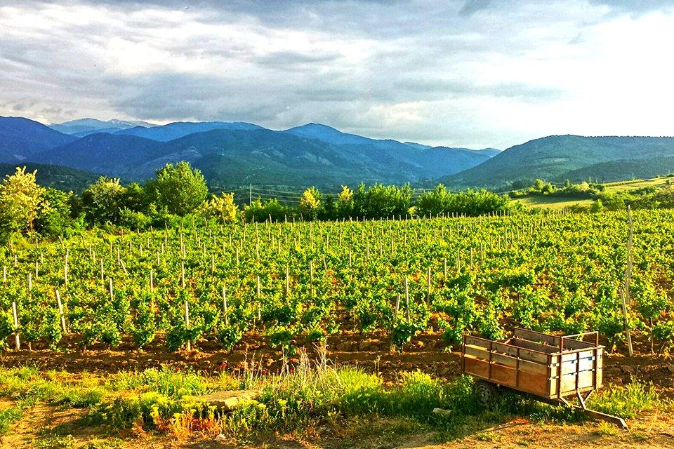mk_macedonië_wijnvelden.jpg
