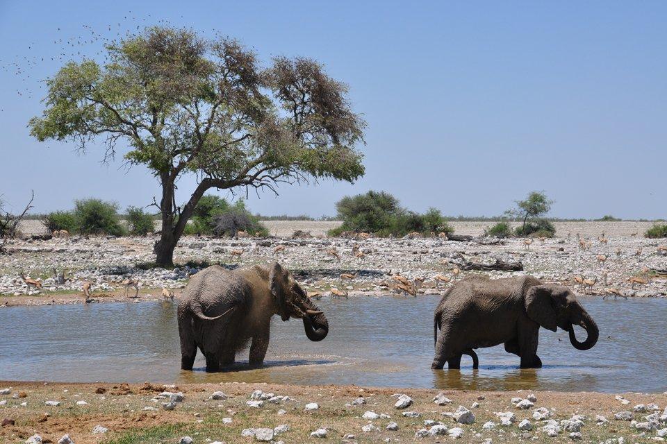 Olifanten, Namibië