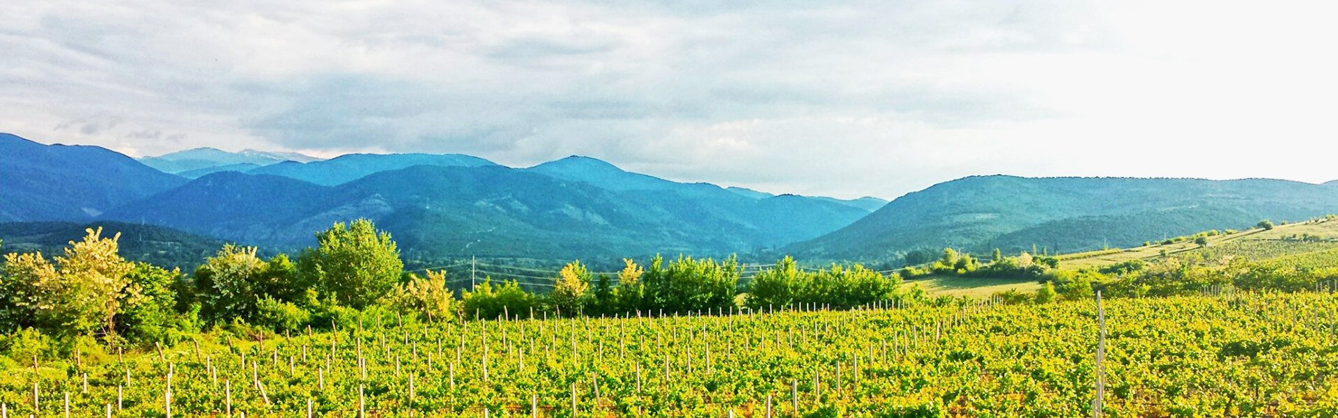 Wijnvelden, Macedonië