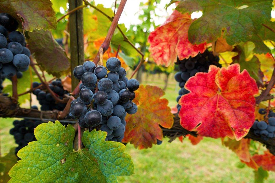 Rondreis Wijn en cultuur in Italië in Diversen (Italië, Italië)