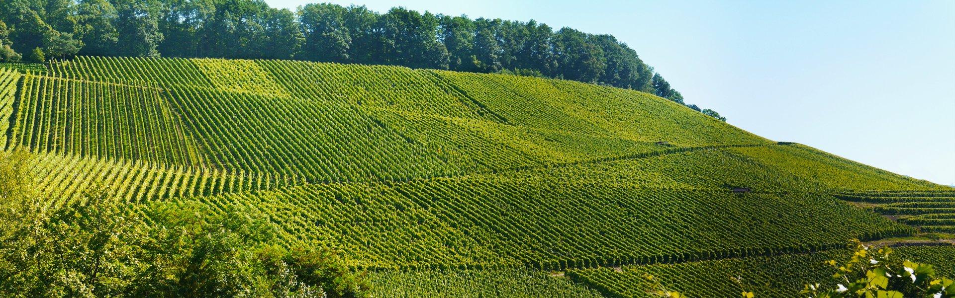 Banner wijnvelden in Duitsland