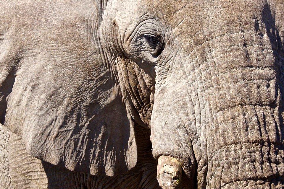 Olifant, Namibië | Foto Peter van de Wiel