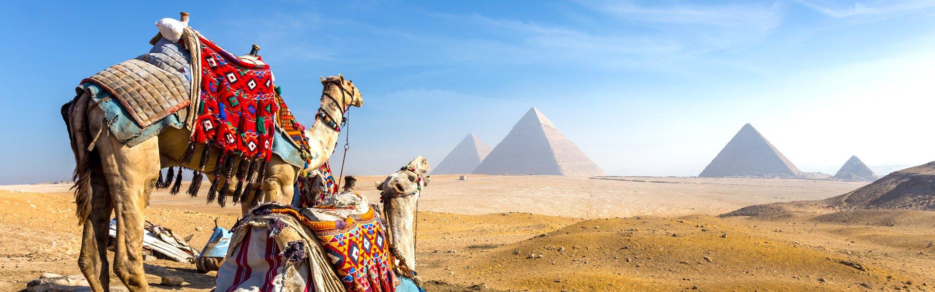Kamelen en piramides van Gizeg, Egypte