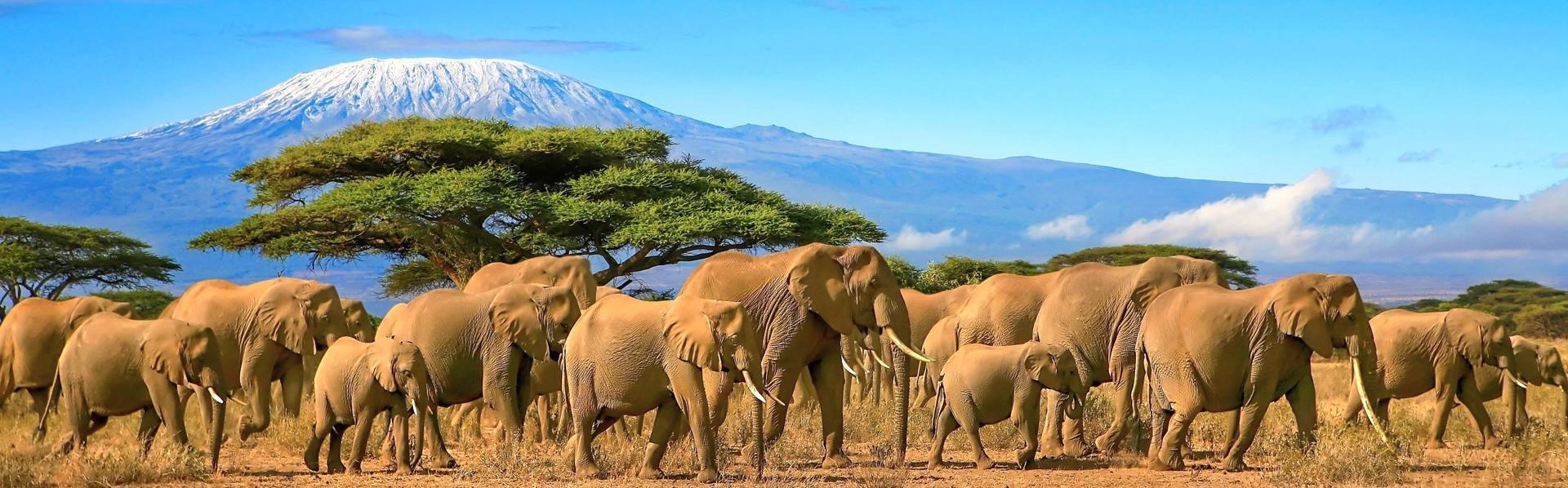 Uitzicht op de Kilimanjaro vanuit Tanzania, met olifanten
