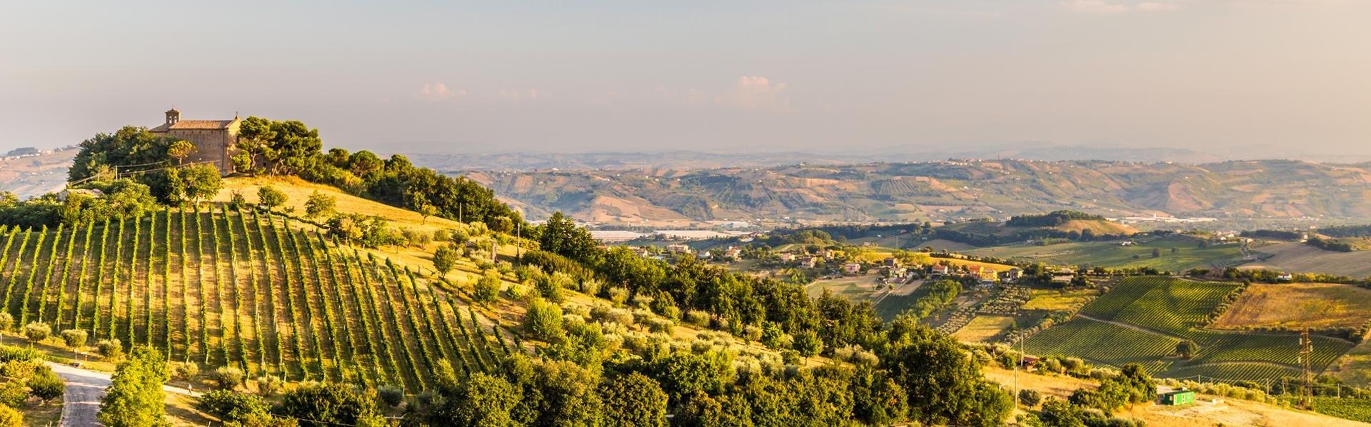 Wijngaarden in De Marken, Italië