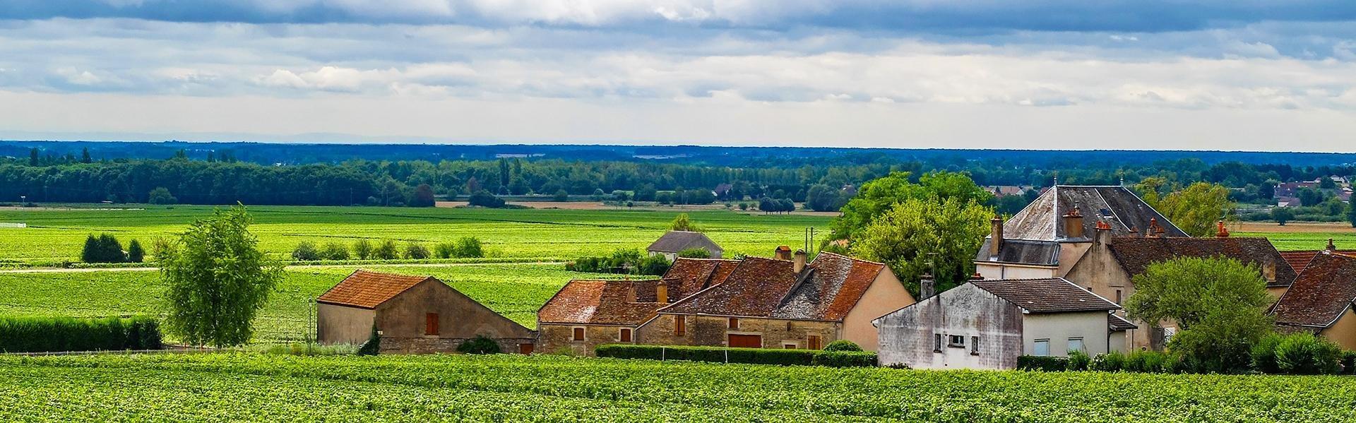 Aloxe Corton in de Bourgogne, Frankrijk