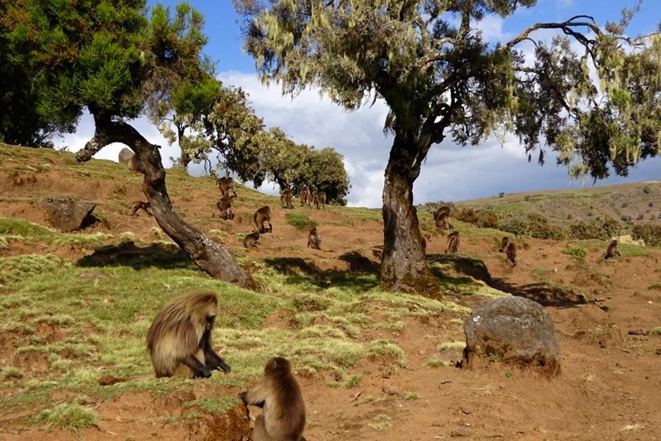 Simiengebergte, Ethiopië