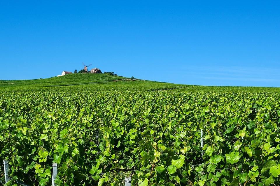 Montagne de Reims, Champagnestreek, Frankrijk